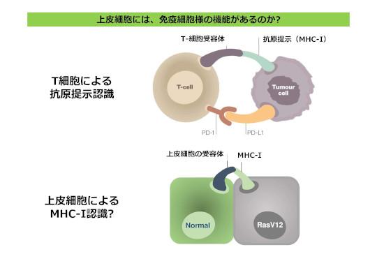 21' Science Japan meeting_Maruyama.jpg