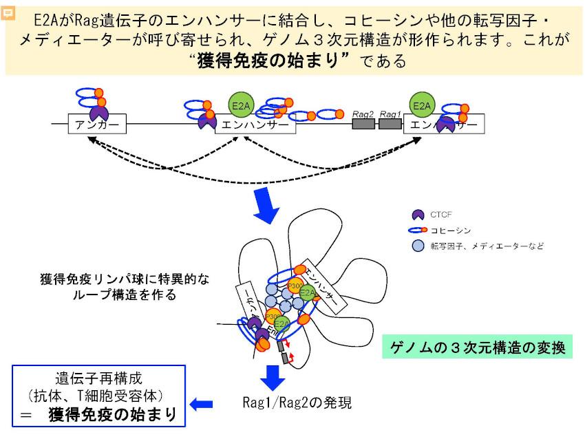 Miyazaki_Summary1.jpg